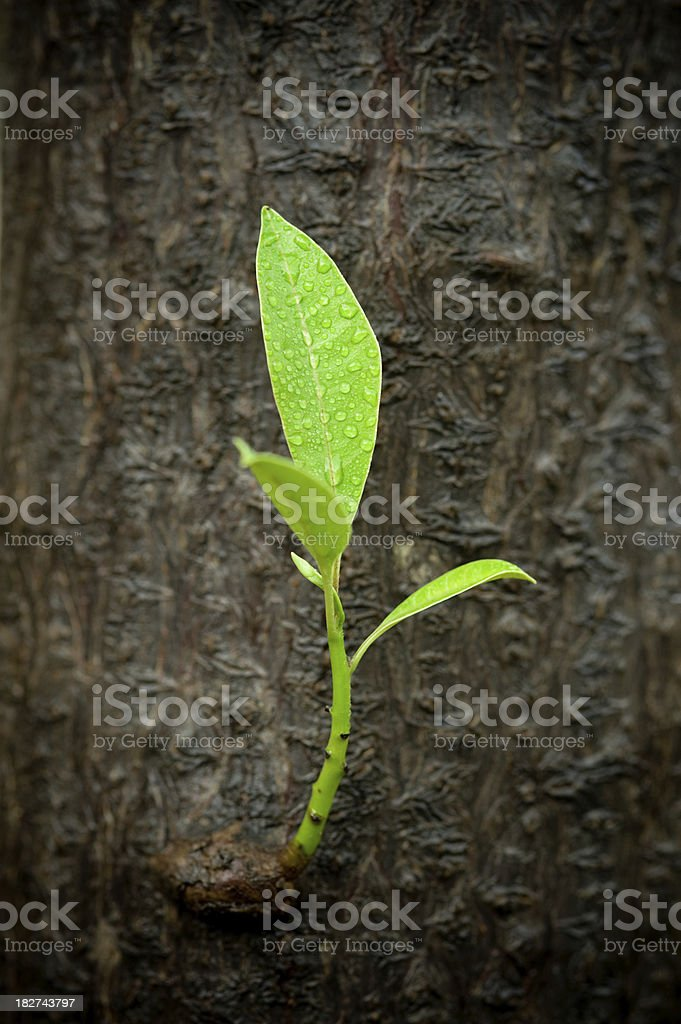 Leaf in soft focus. royalty-free stock photo