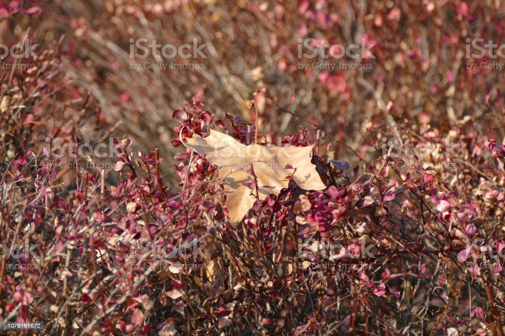 Leaf in the bush stock photo