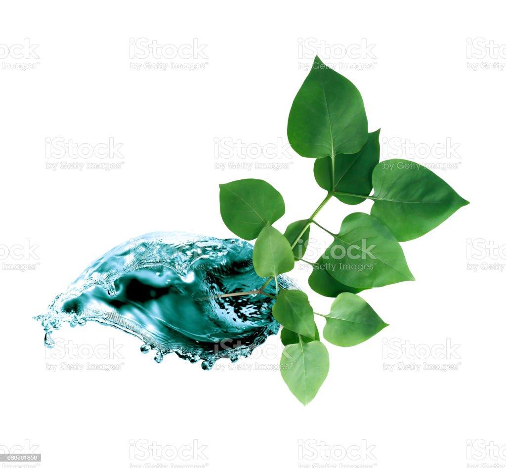 Leaf In Water Splash foto stock royalty-free