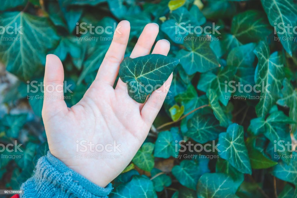 leaf in woman hand stock photo