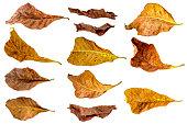leaf isolate nature