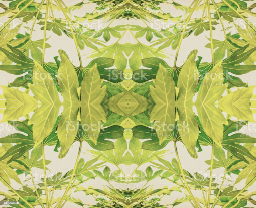 Blatt-Kaleidoskop – Foto