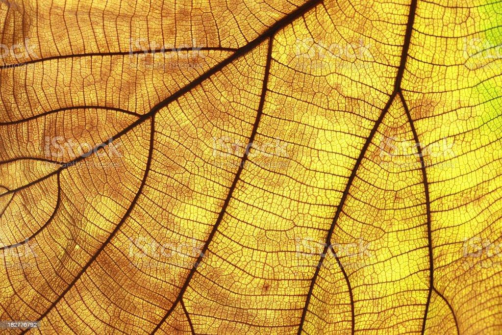 leaf line royalty-free stock photo