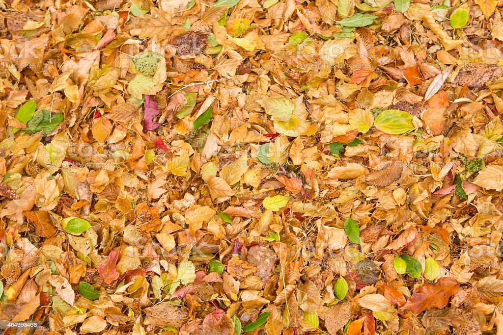 Leaf litter of autumn leaves on the ground stock photo