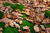 Leaf litter on moss