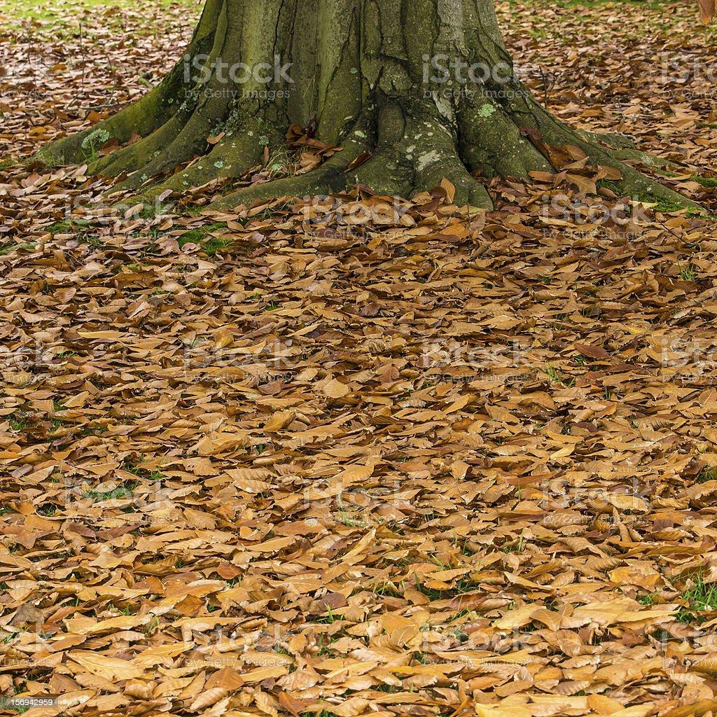 Leaf Litter stock photo