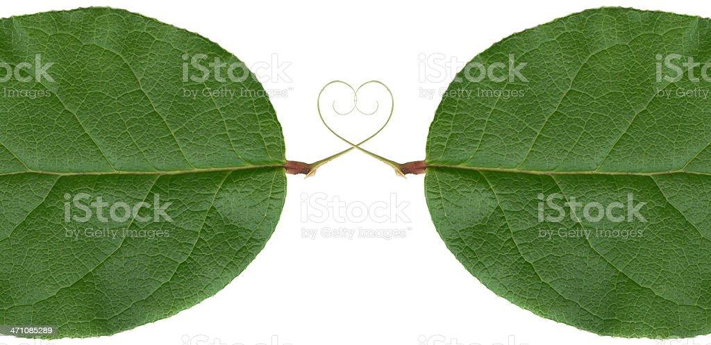 Leaf Love XXL royalty-free stock photo
