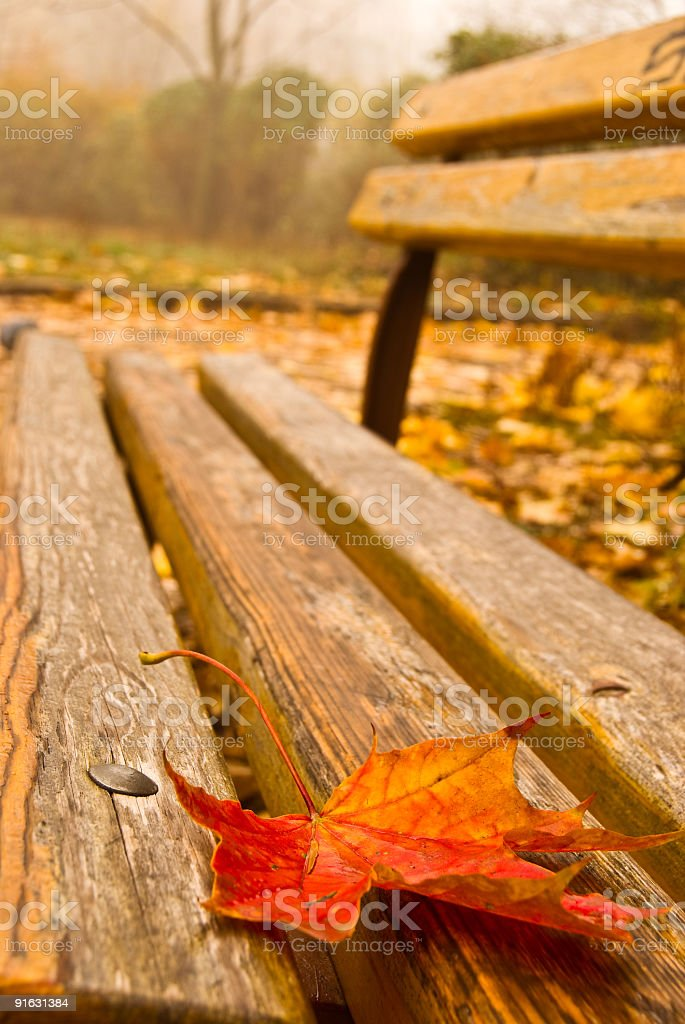 A leaf lying on a wooden bench in autumn royalty-free stock photo