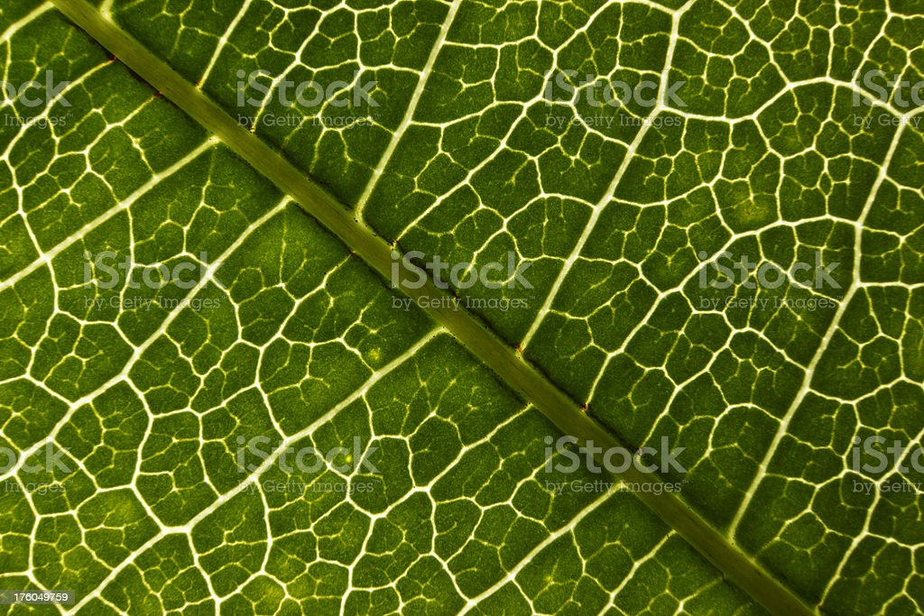 Leaf Macro. royalty-free stock photo