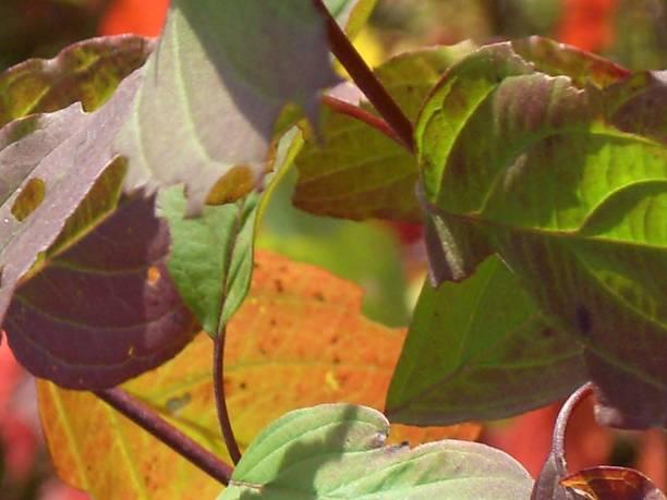 Leaf Medley stock photo
