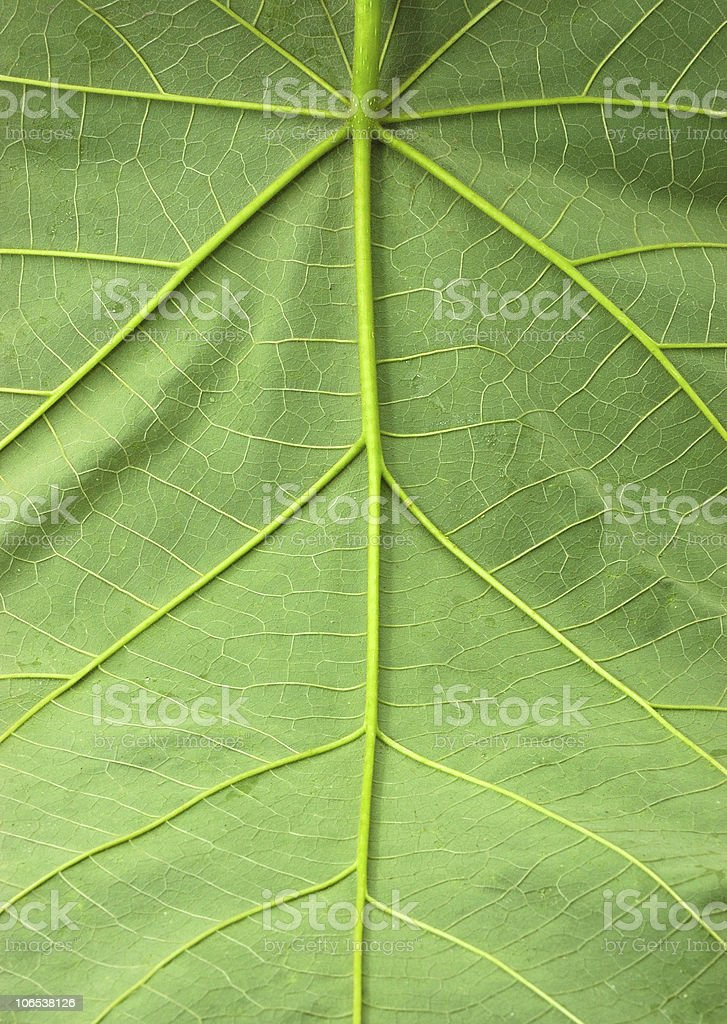 Leaf of a plant close up royalty-free stock photo