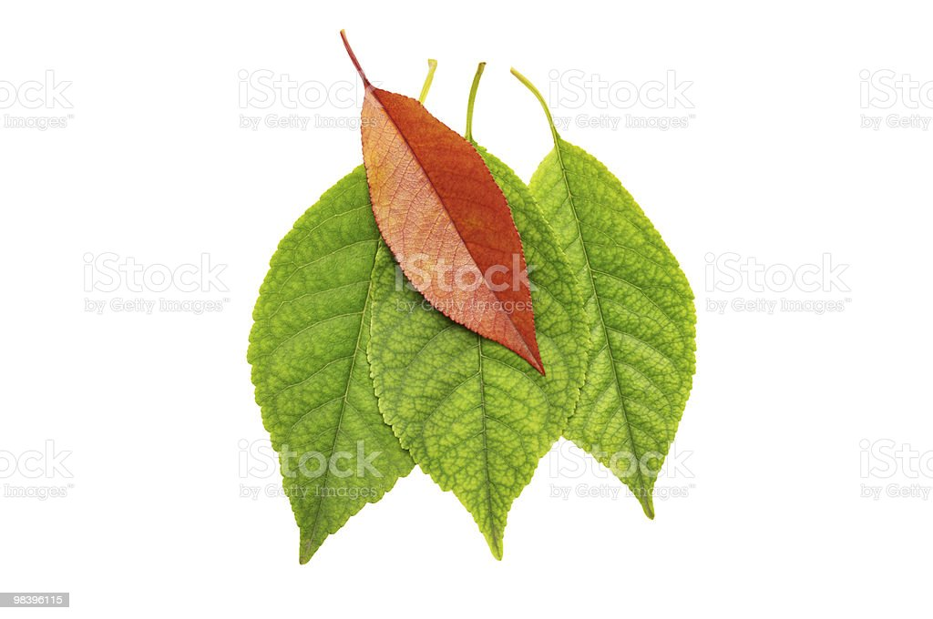 Leaf of a plant royalty-free stock photo