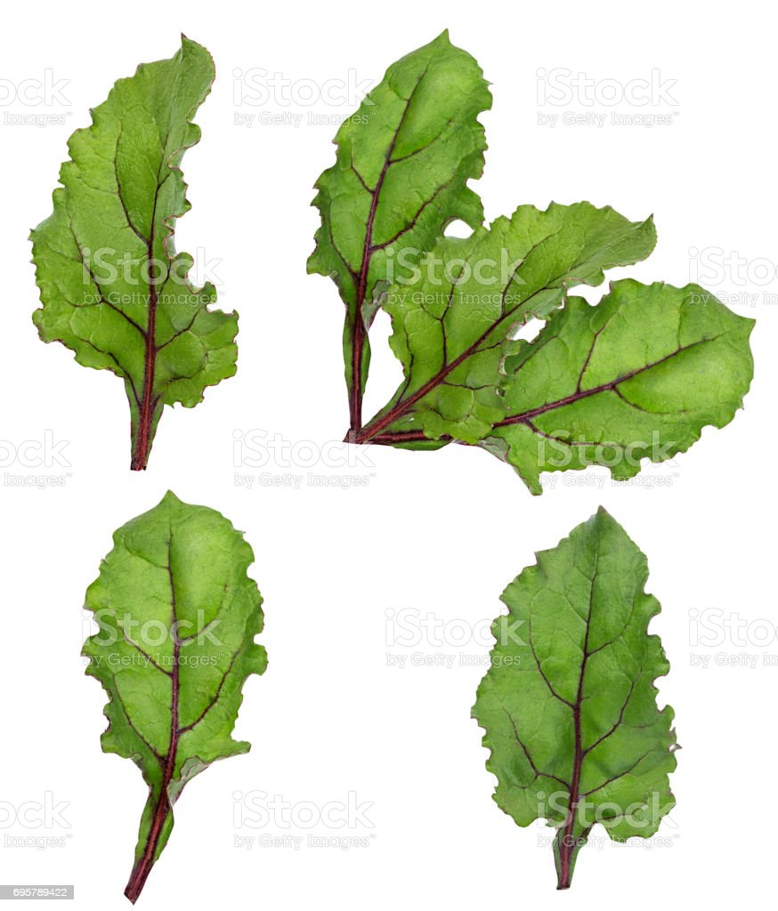 leaf of beetroot on white stock photo