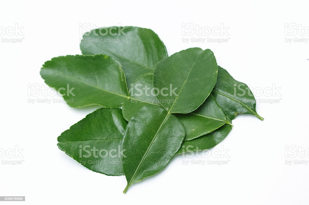 Leaf of bergamot (kaffir lime) isolated on white background. stock photo