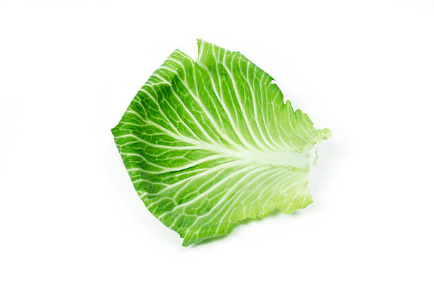 Leaf of cabbage on white stock photo
