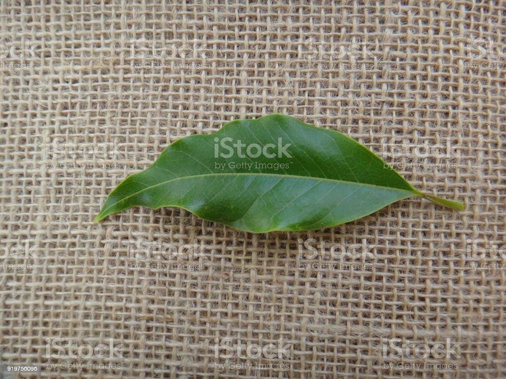 Leaf of champak tree - Jute background stock photo