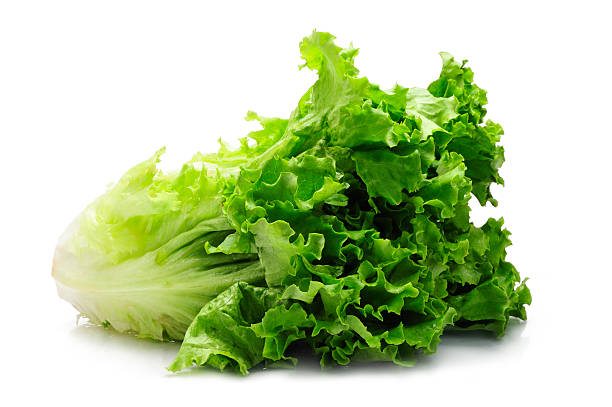 leaf of green romaine lettuce with white background - lettuce stock photos and pictures