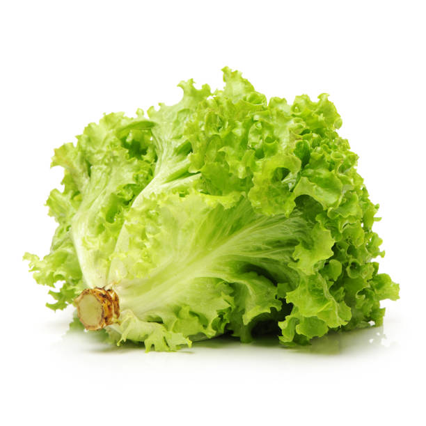 Leaf of green Romaine lettuce with white background Leaf of green Romaine lettuce with white background butterhead lettuce stock pictures, royalty-free photos & images