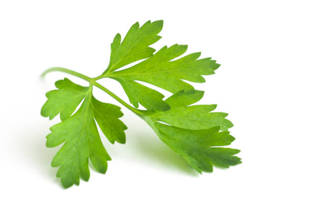leaf of parsley - parsley stock photos and pictures