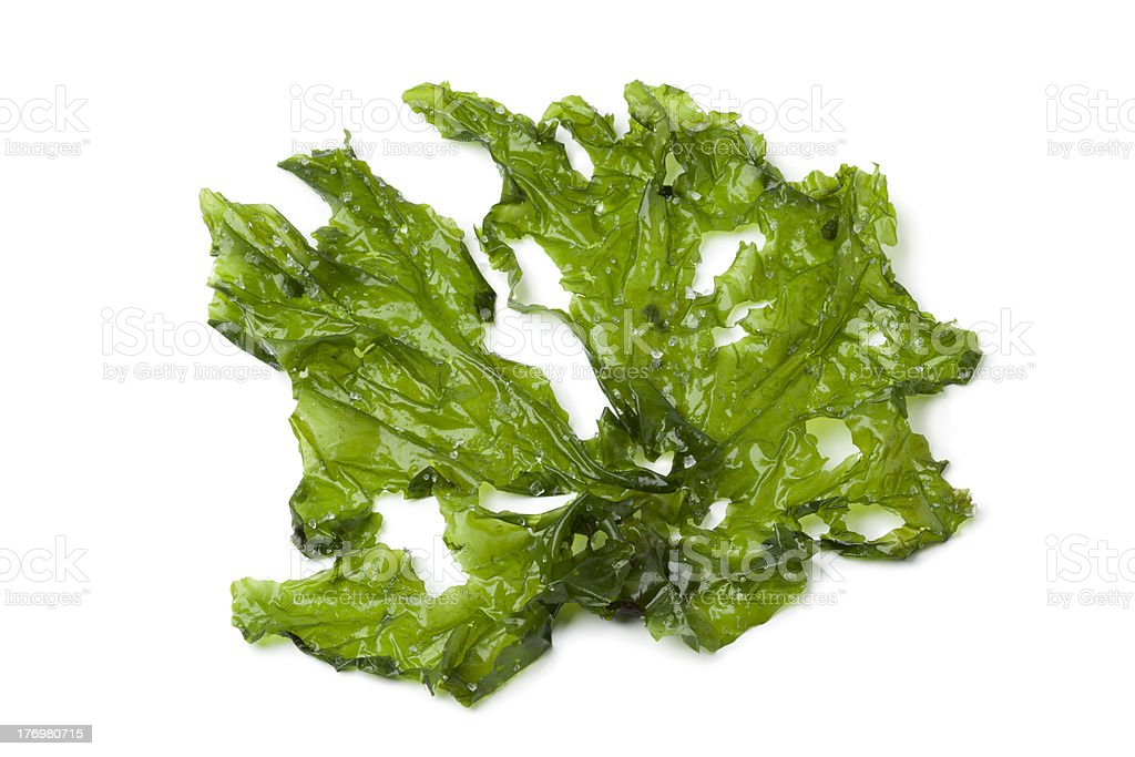 Leaf of Sea lettuce stock photo