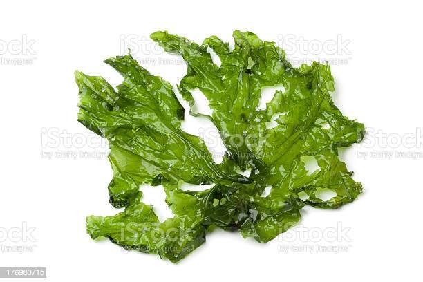 Leaf Of Sea Lettuce Stockfoto en meer beelden van Biologisch