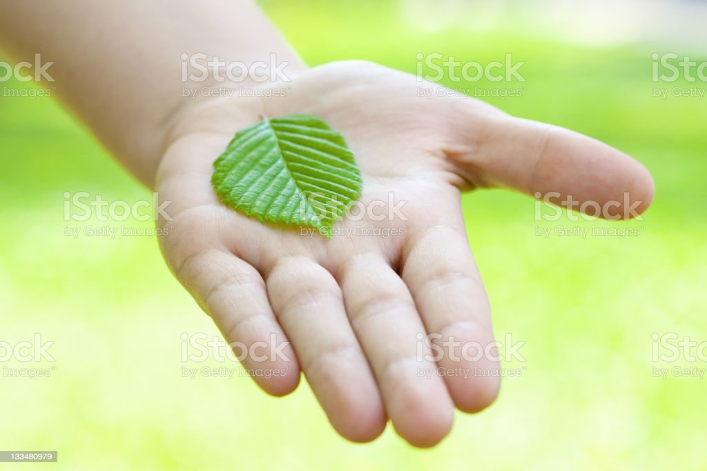 Leaf on a palm. royalty-free stock photo