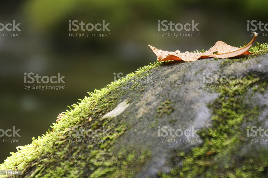 Leaf on a Rock stock photo