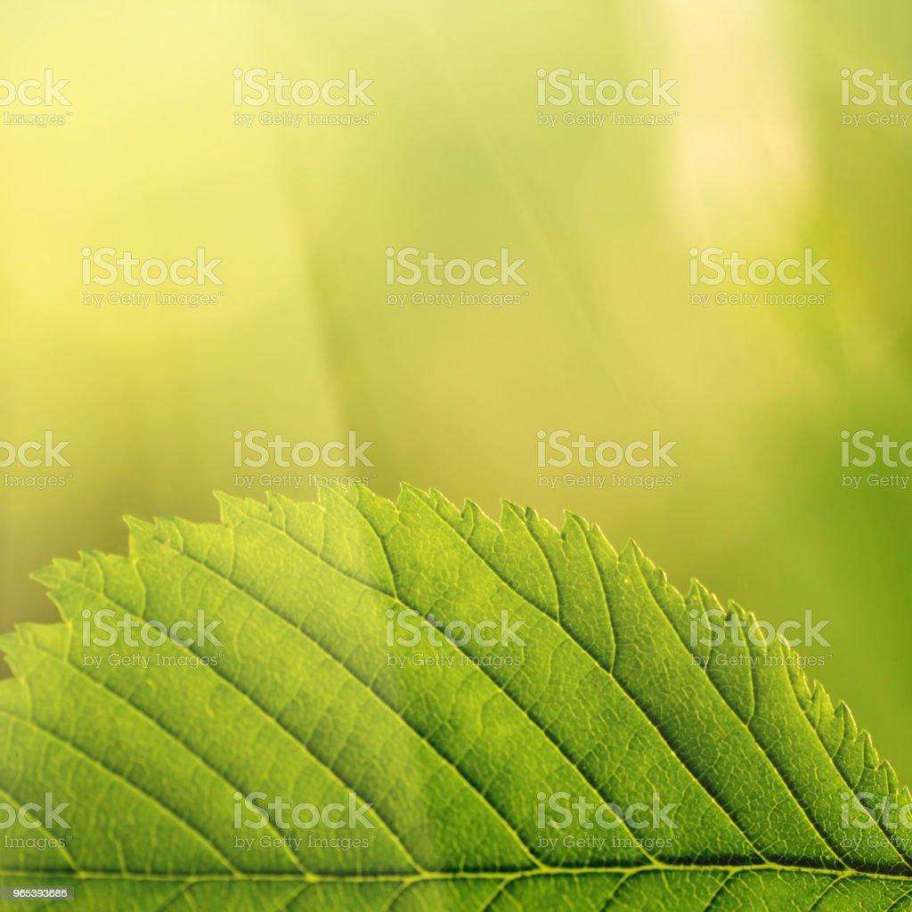 des feuilles sur un arbre dans la forêt. - Photo de Arbre libre de droits