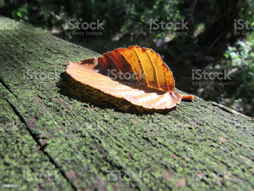 Leaf on boardwalk stock photo