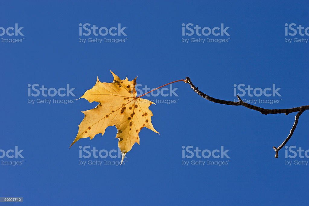 Leaf on branch stock photo