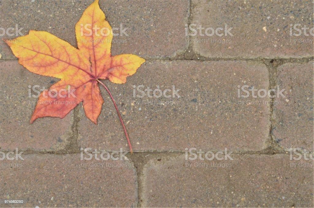 Leaf on bricks stock photo