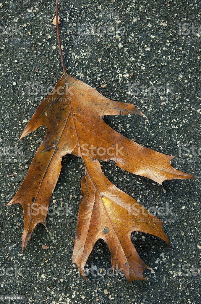 Leaf on Pavement stock photo