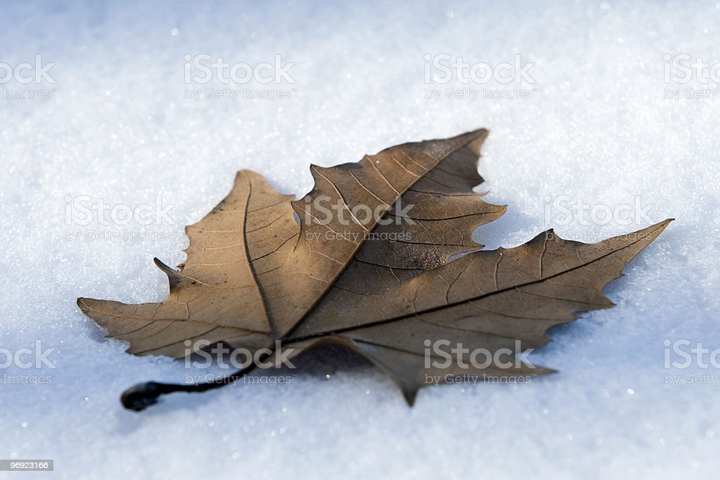Leaf On Snow royalty-free stock photo
