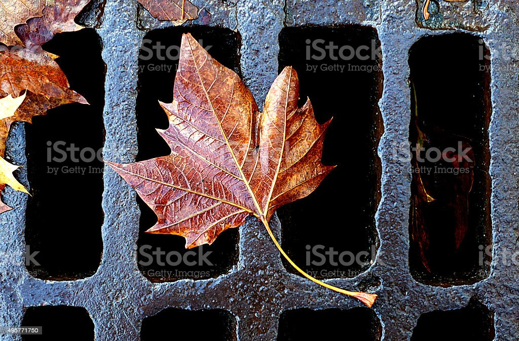 Leaf on Storm Sewer Grate stock photo