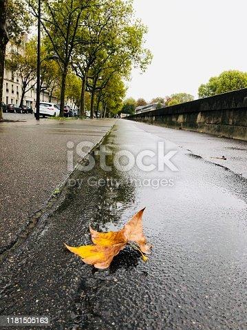 Autumn leaf on the floor in Paris
