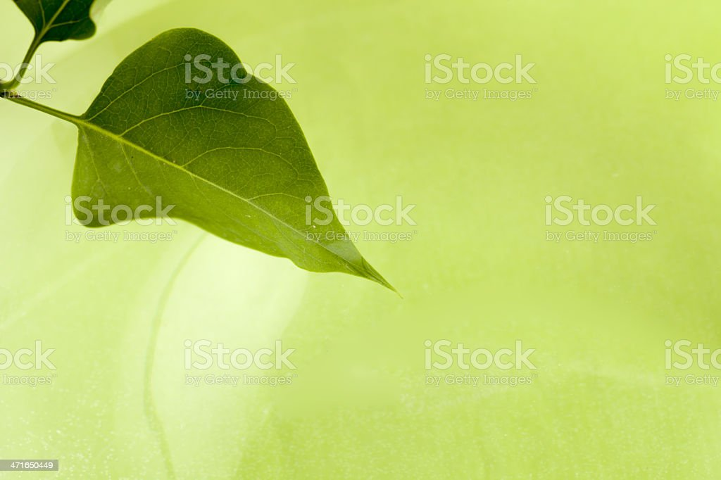 Leaf on the green royalty-free stock photo