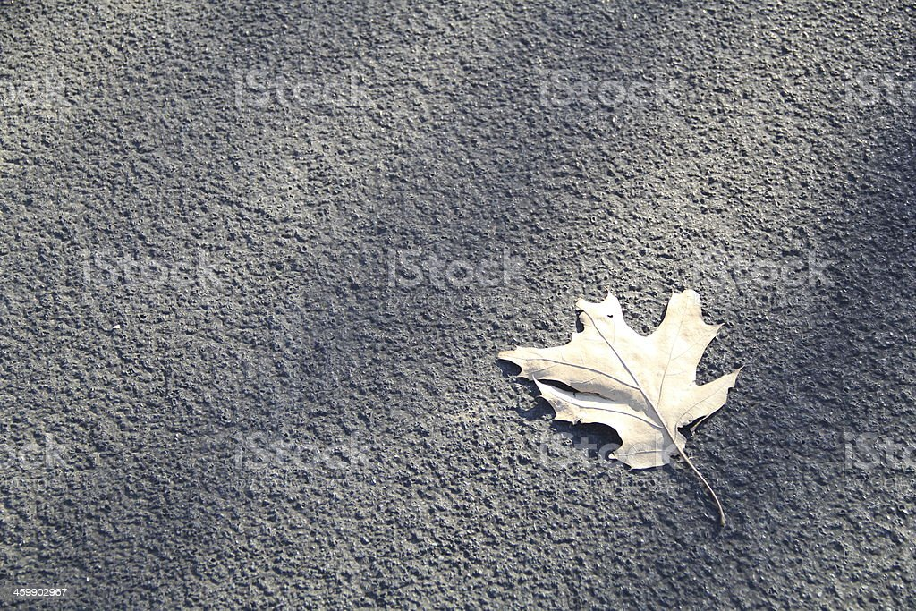 Leaf on the Street Background royalty-free stock photo