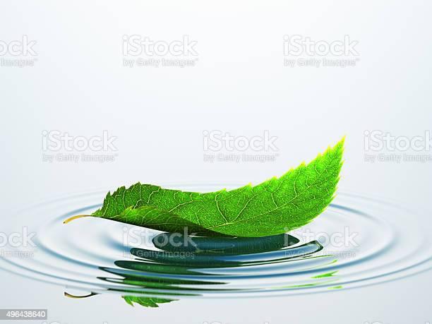Leaf on the water picture id496438640?b=1&k=6&m=496438640&s=612x612&h=46kflooprepgy 6tk ms20tvpnnxtzz6iztgez9rq0k=