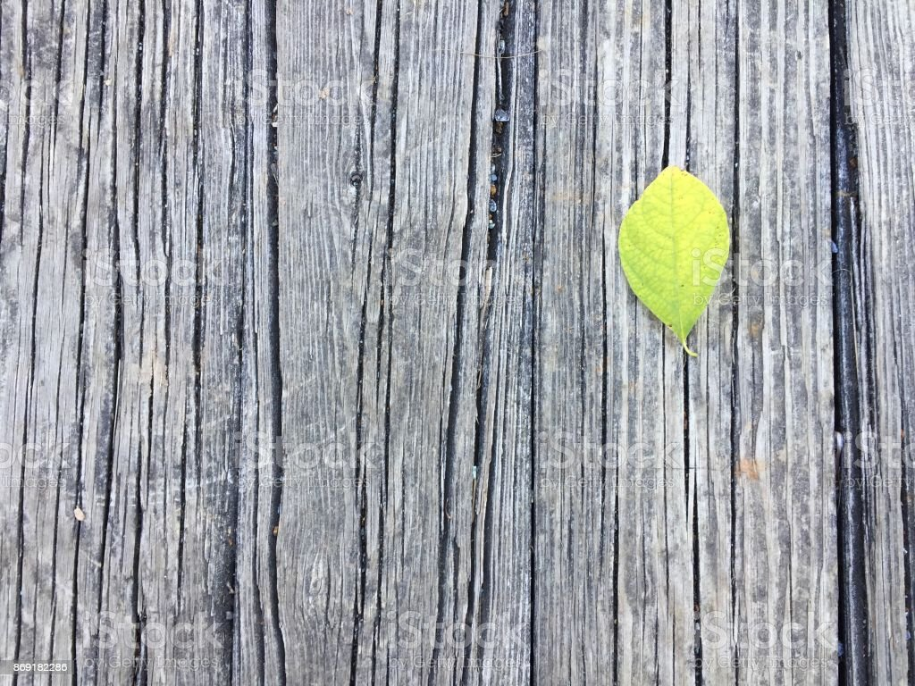 Leaf on wood stock photo