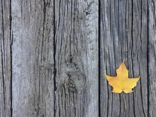 Leaf on wood stock photo