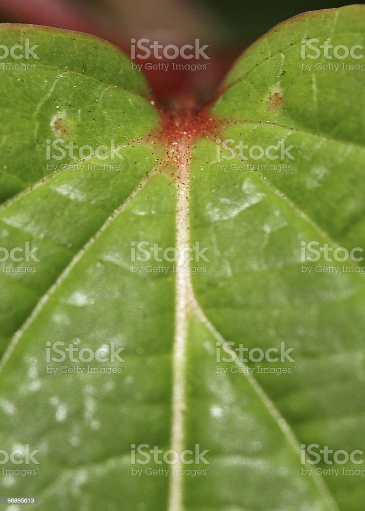 Leaf pattern and shape royalty-free stock photo