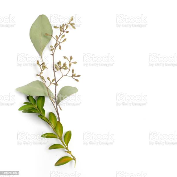 Leaf pattern frame made of green leaves on white background flat lay picture id936242080?b=1&k=6&m=936242080&s=612x612&h=zl0xly i5 lcbw3yoljxg hvn4z2tknqfqpyyu3zl3e=