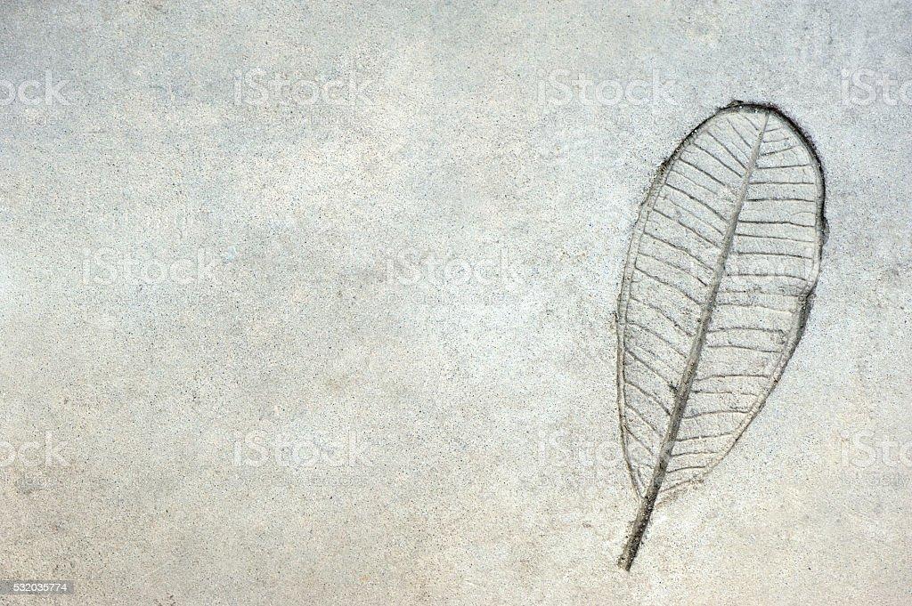 leaf pattern on concrete background stock photo