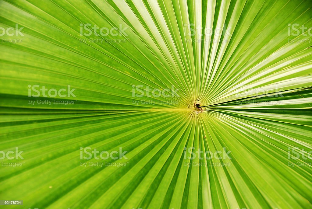 Leaf Pattern royalty-free stock photo