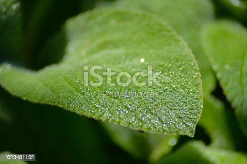 istock Leaf 1023481132