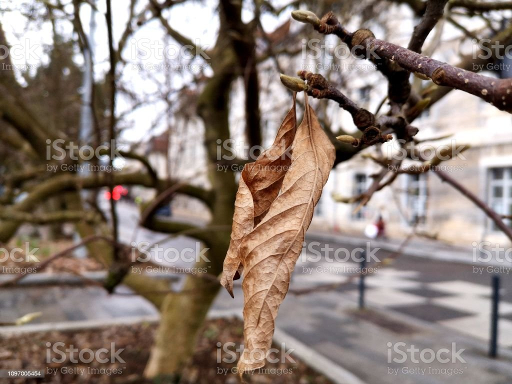 Feuille - Photo