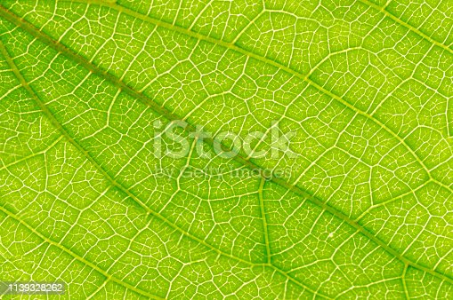 Close-up view of a green coloured leaf