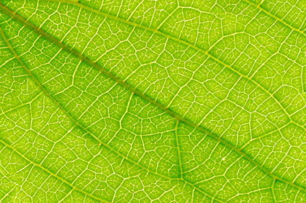 leaf - foliate pattern stock photos and pictures