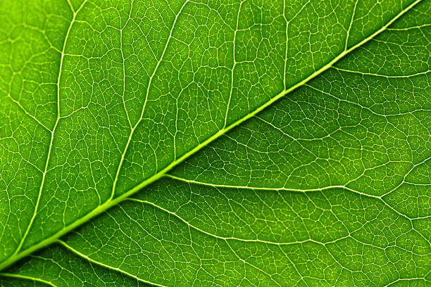 Leaf – Foto
