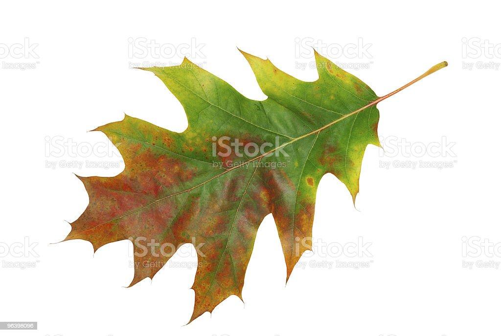 Leaf - Royalty-free Autumn Stock Photo